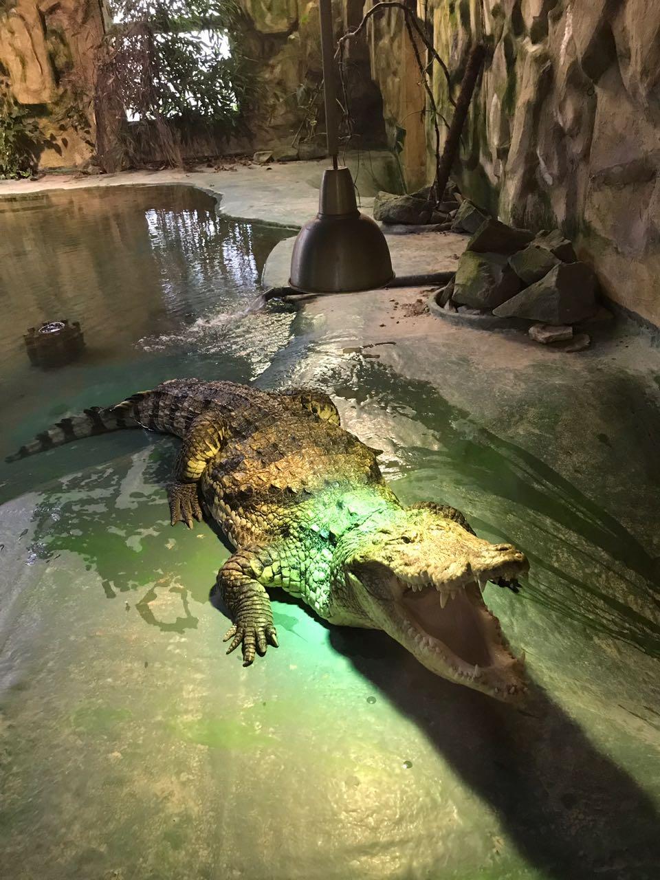 Krokodil im TerraZoo